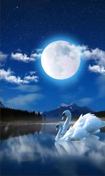 Swan Night Lake poster