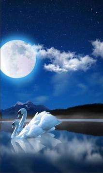 Swan Night Lake apk screenshot
