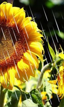 Sunflowers Free 2016 apk screenshot