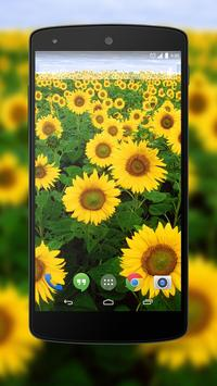 Flowers Wallpapers poster