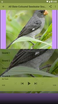 Slate-Coloured Seedeater Bird Sounds for Android - APK Download