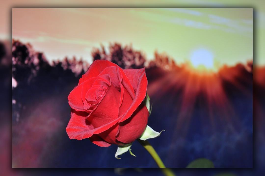 HD flowers wallpaper poster