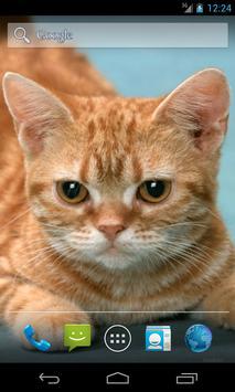 Funny Red Cat screenshot 3