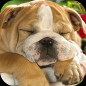 Sleeping Puppy HD icon