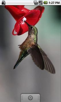 Colored bird, Live Wallpaper apk screenshot
