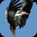 Stork Live Wallpaper