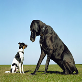 small dog and large dog icon