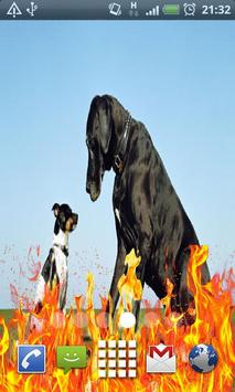 small dog and large dog apk screenshot
