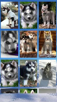 Siberian Husky Puzzle Game poster
