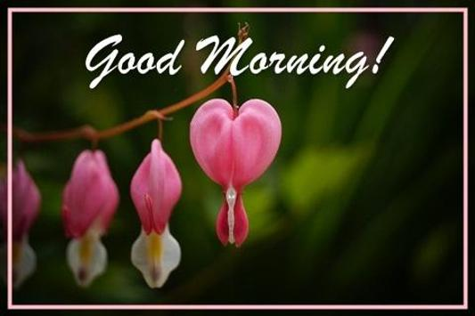 Good morning cards apk download free lifestyle app for android good morning cards poster good morning cards apk screenshot m4hsunfo