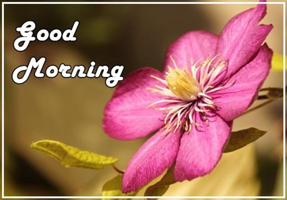 Good Morning Flowers APK Download - Free Lifestyle APP for