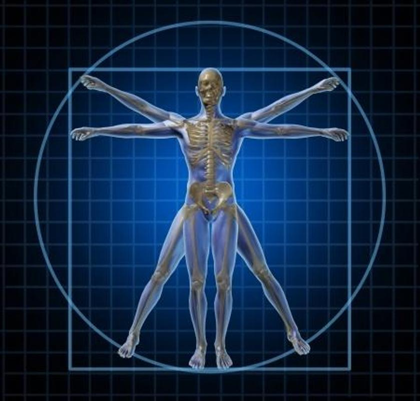 Human Anatomyphysiology Wiki For Android Apk Download