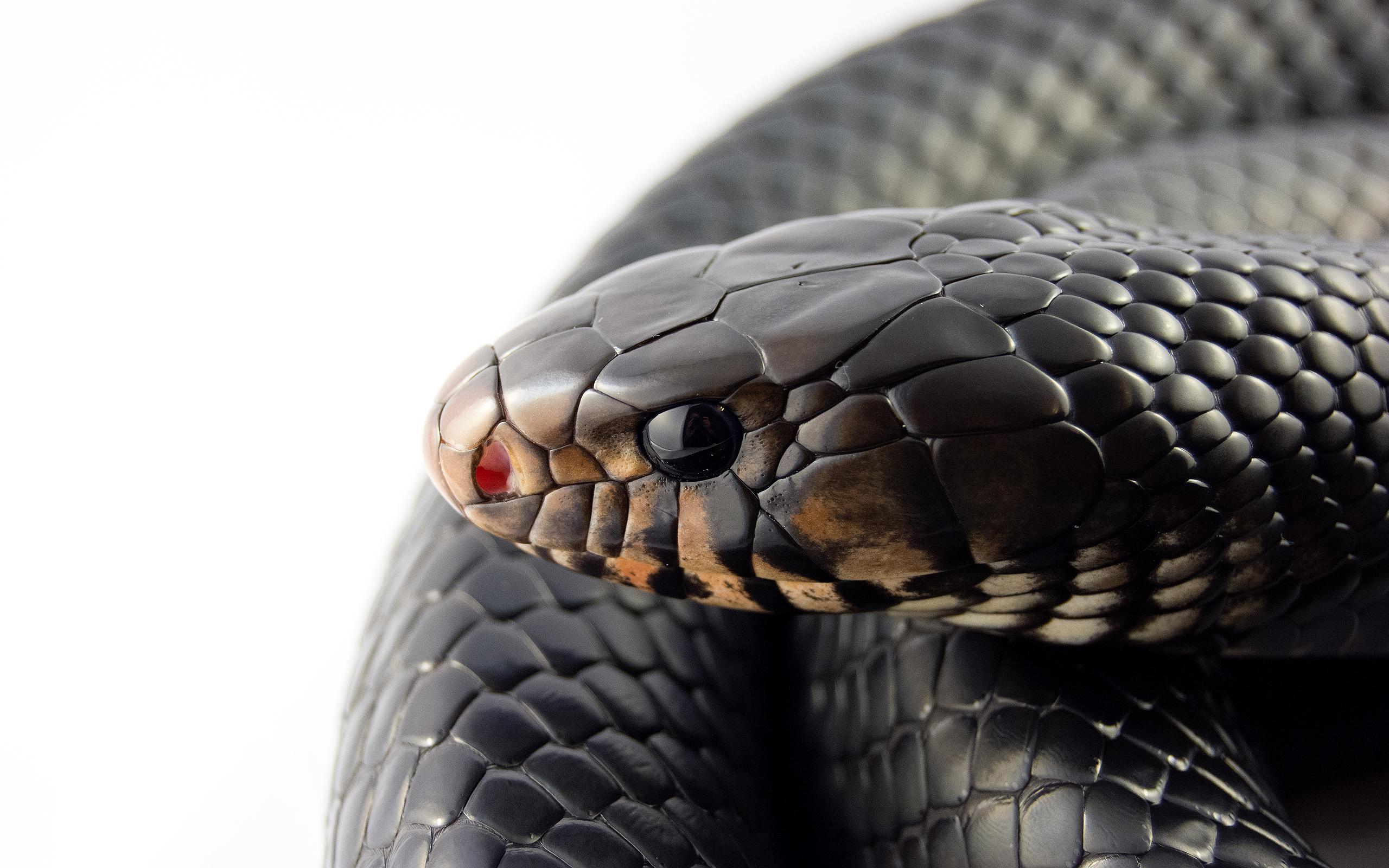 прикрепить какое-либо фото кобра обои на телефон его работу