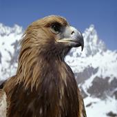 Snow Eagle Lock Screen icon