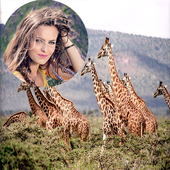 Wild Animal Photo Frames icon