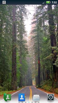 Redwoods Live Wallpaper poster