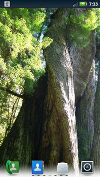Redwoods Live Wallpaper apk screenshot