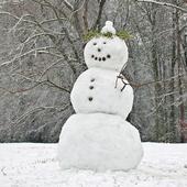 Winter Wonderland Wallpaper icon