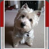Ultimate Dog Care Kit icon