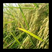 किसान मित्र – खाद्यान्न उत्पादन के लिए icon