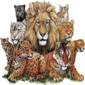Animal Kingdom icon