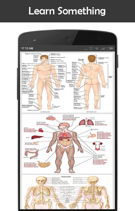 Menschliche Anatomie für Android - APK herunterladen