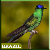 Brazilian Exotic Bird icon