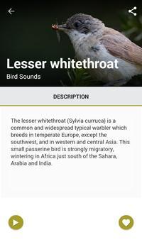 75 Birds Sound World poster