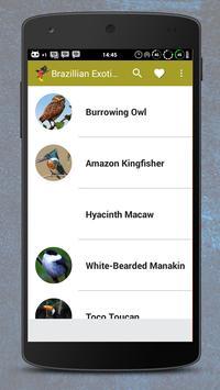 Sons De Pássaros Naturais screenshot 1