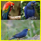 Sound Of Bird Chirping icon