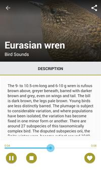 Sound Of Bird Chirping apk screenshot