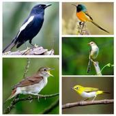 Top Suara Burung Offline icon