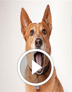 Sonido  De Perros poster