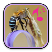 Bee Sound Effect icon