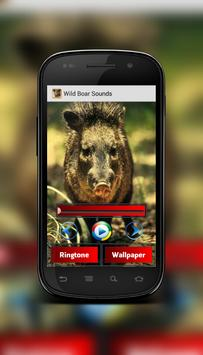 Wild Boar Sounds poster