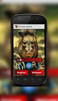 Wild Boar Sounds screenshot 1
