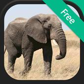 Elephant Sounds and Ringtones icon