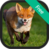 Fox Sounds and Ringtones icon