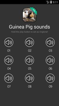 Guinea Pig Sounds poster