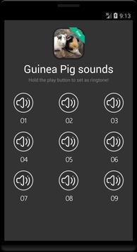 Guinea Pig Sounds screenshot 3