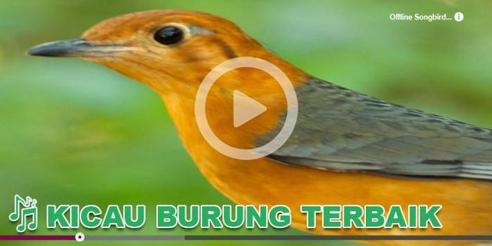 Kicau Burung Masteran Anis poster