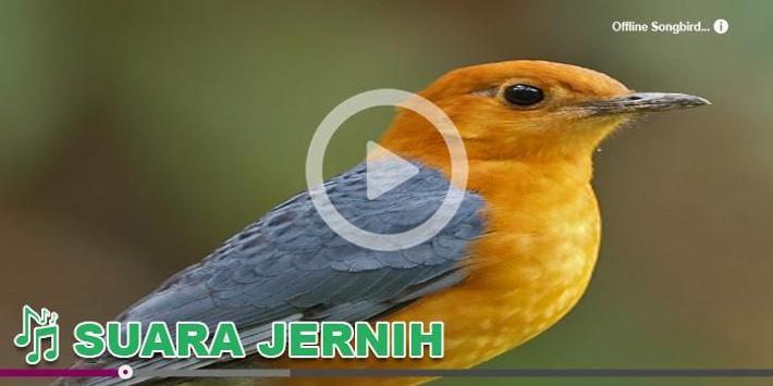 Kicau Burung Masteran Anis apk screenshot