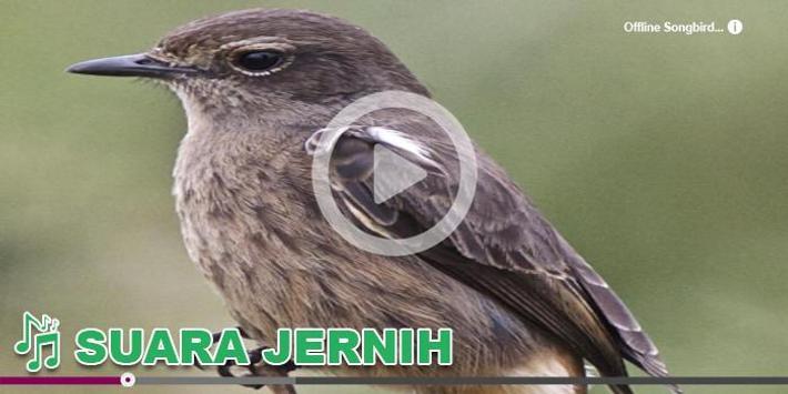 Kicau Burung Masteran Decu For Android Apk Download