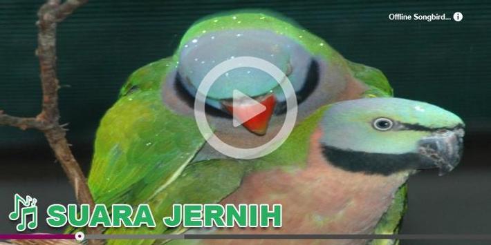 Kicau Burung Masteran Juara apk screenshot