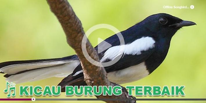 Kicau Burung Masteran Juara poster