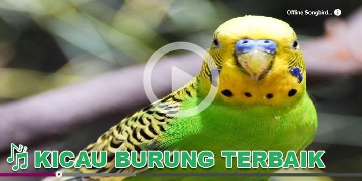 Kicau Burung Lengkap apk screenshot