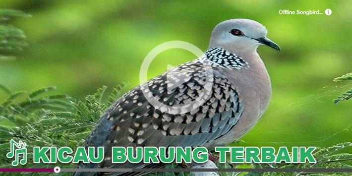 Kicau Burung Masteran Perkutut poster