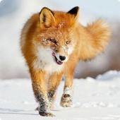 Foxes Sound FX icon