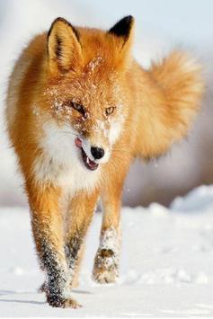 Foxes Sound FX screenshot 1