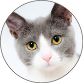 Cat Sounds and Ringtone icon